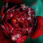 20160523 - flora-min