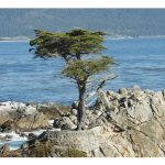 pebble-beach-1650666__480_rzd